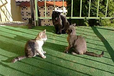 wachsen katzen barthaare nach
